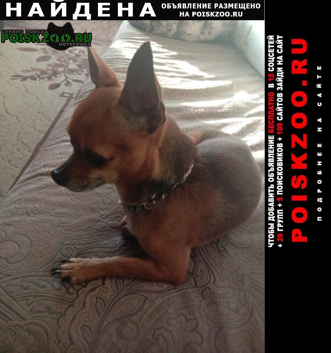 Найдена собака кобель в районе ск оренбуржье пр.гагарина Оренбург