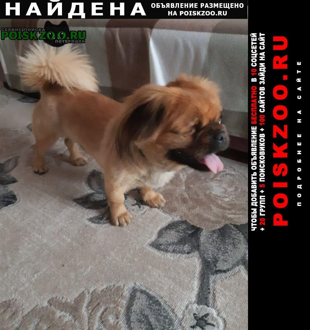 Найдена собака кобель пекинес Краснодар
