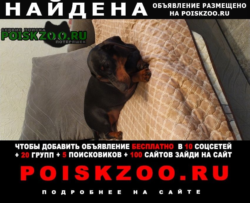Найдена собака такса в кузьминках Москва