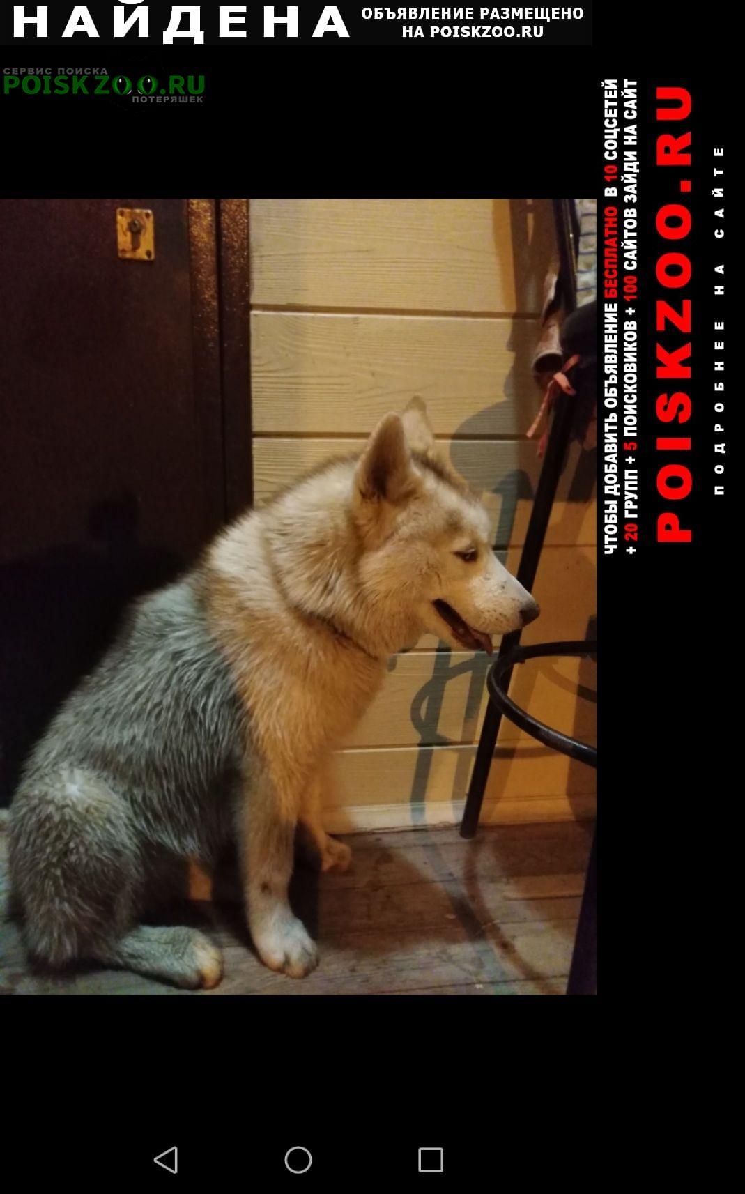 Найдена собака кобель хаски, тихая слобода Чебоксары