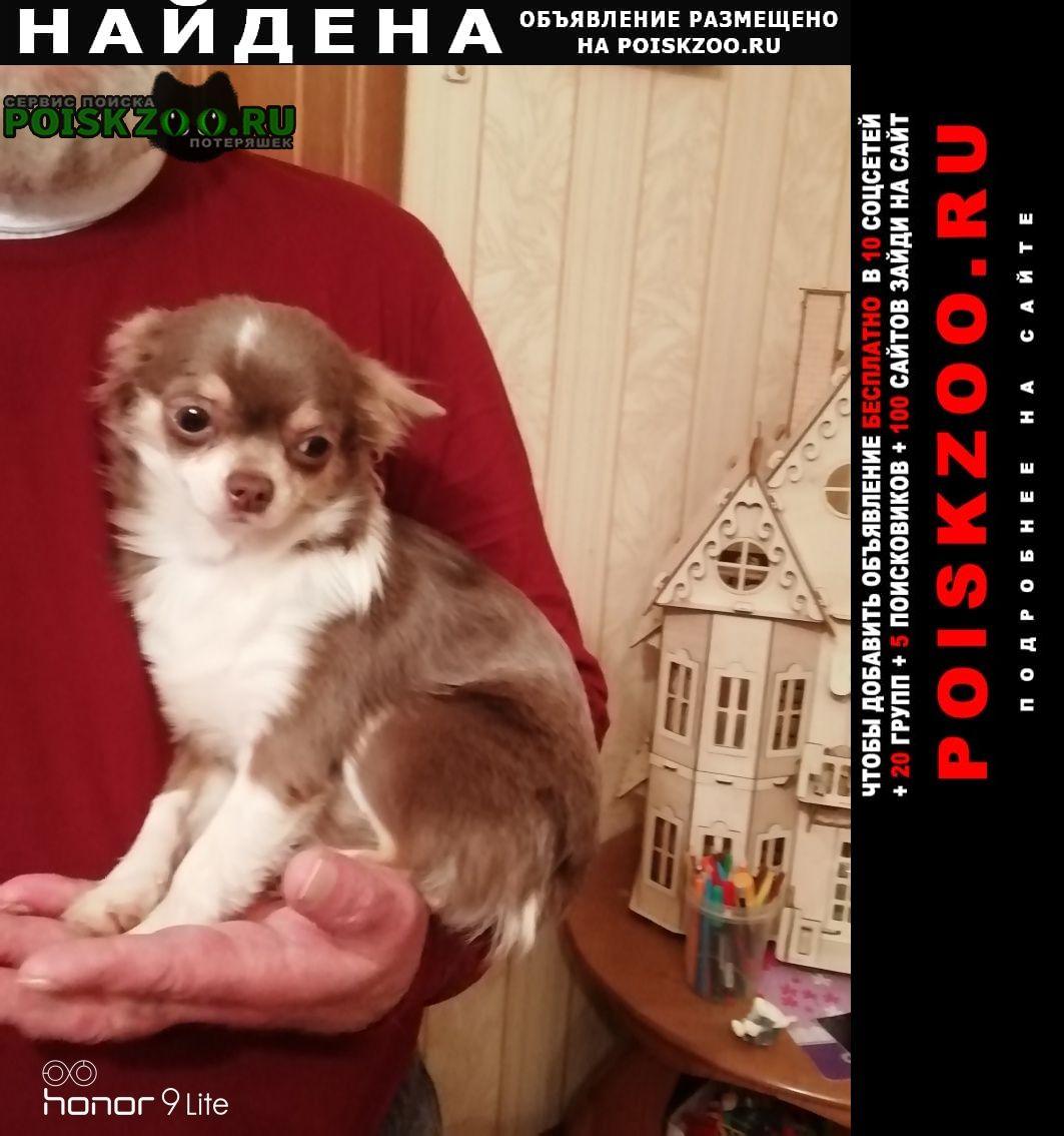 Найдена собака кобель мальчик чихуахуа Иваново