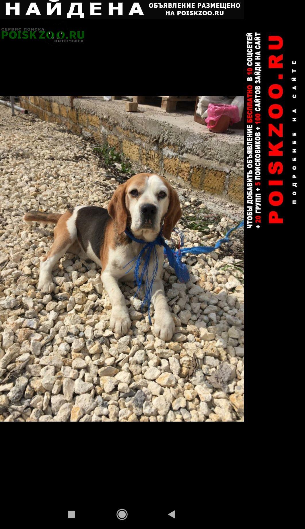 Найдена собака кобель Симферополь