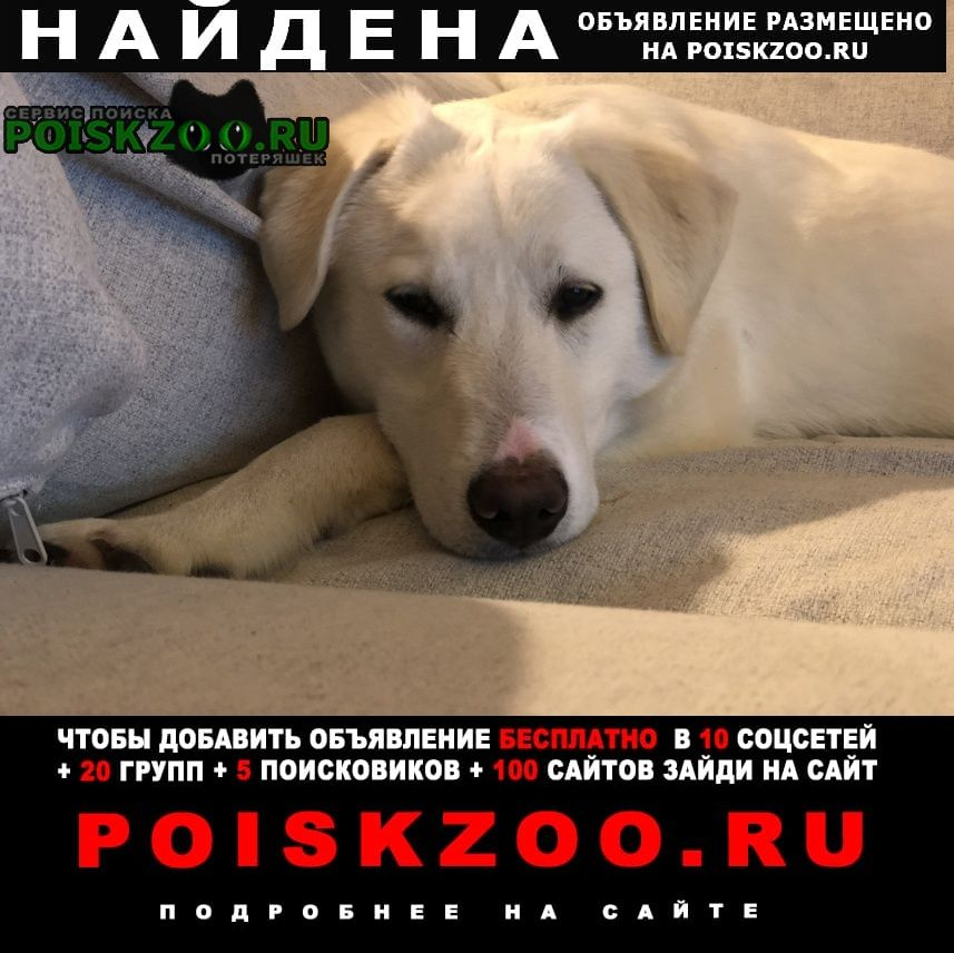 Найдена собака Нарофоминск