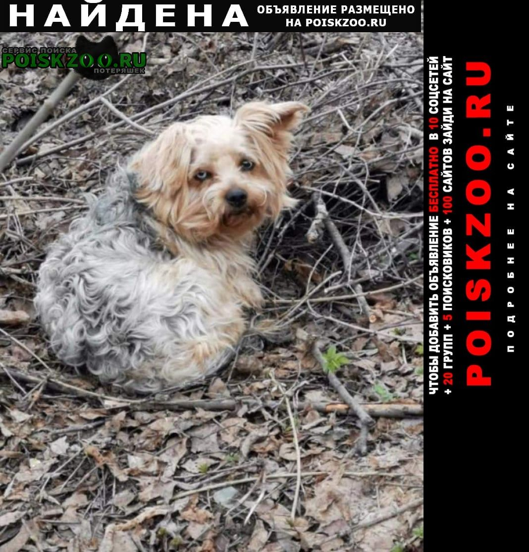 Найдена собака Сергиев Посад