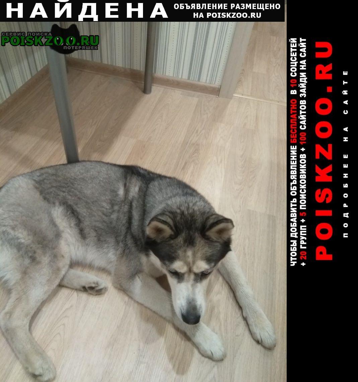 Найдена собака срочно.девочка.был ошейник.автозаводском Нижний Новгород