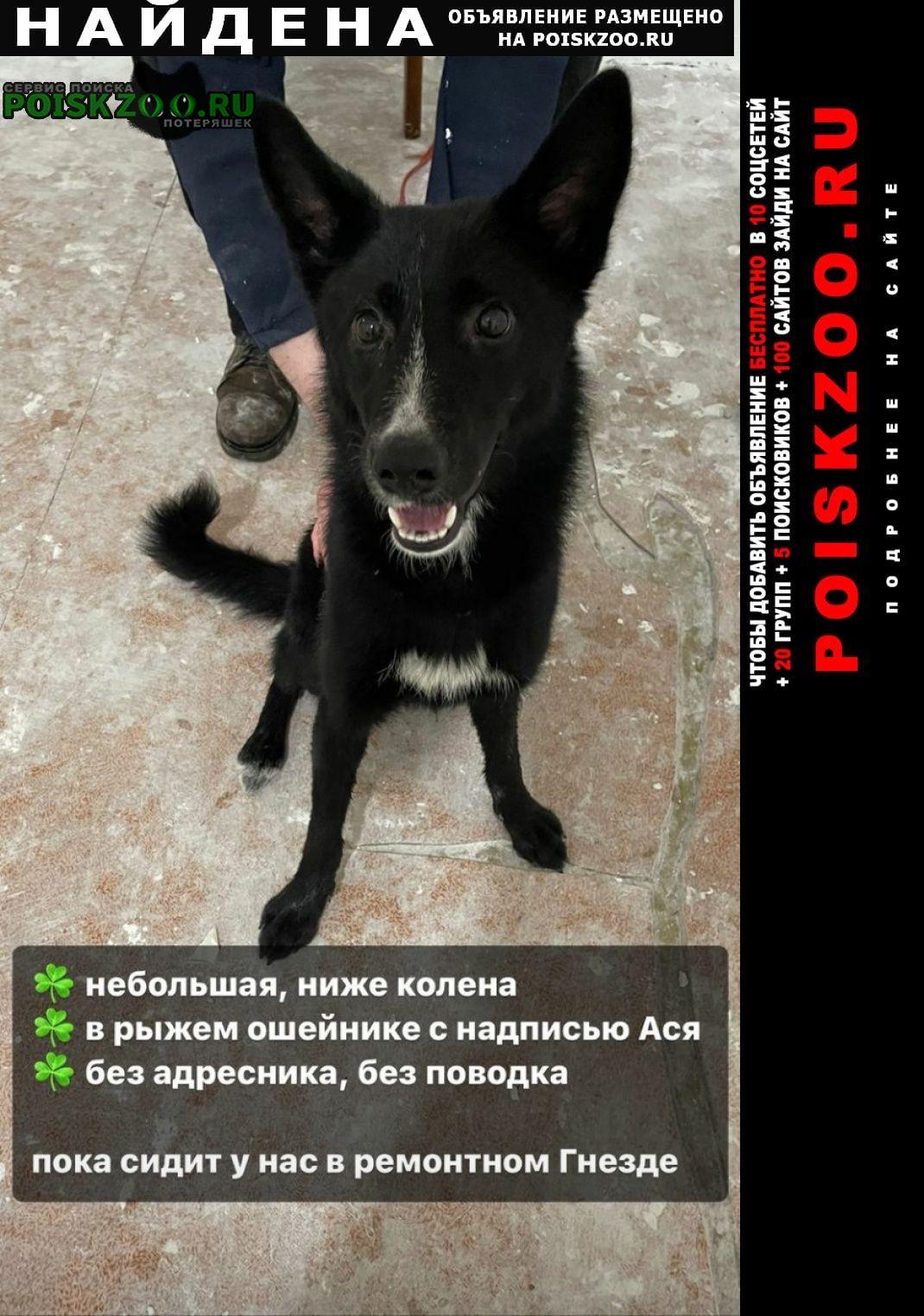 Найдена собака в парке кусково Москва