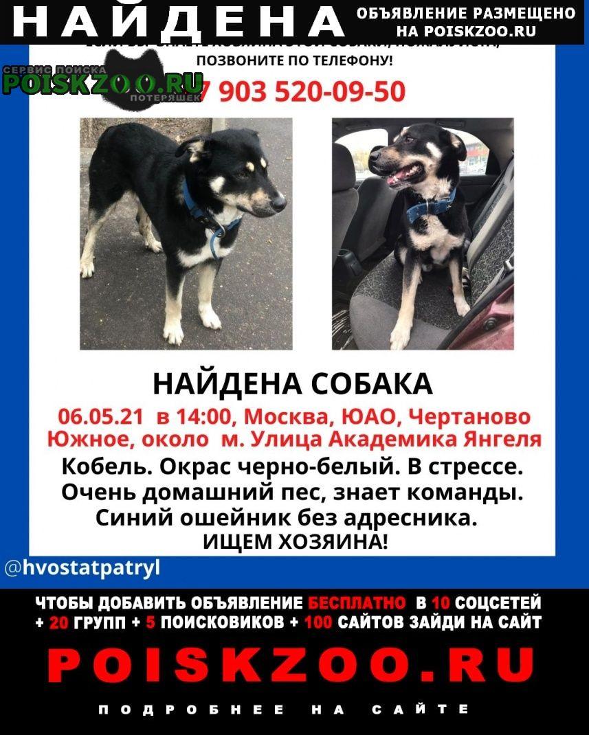 Найдена собака кобель чертаново южное Москва