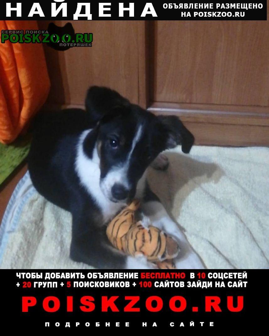 Найдена собака кобель Комсомольск-на-Амуре