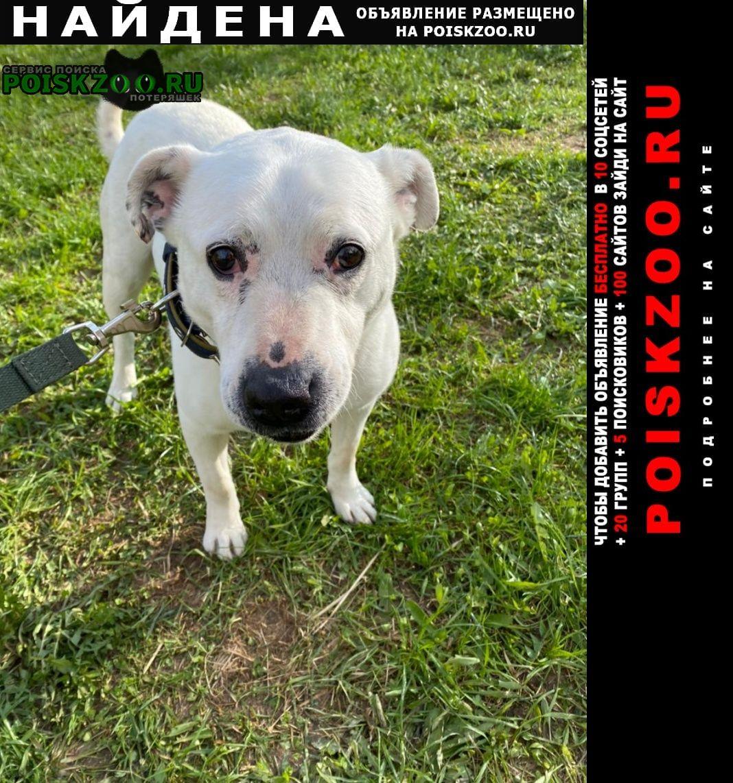 Найдена собака кобель белый пес на кругу д.бужарово Истра
