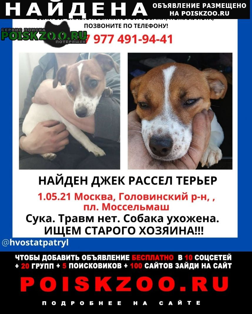 Найдена собака, пл. моссельмаш Москва