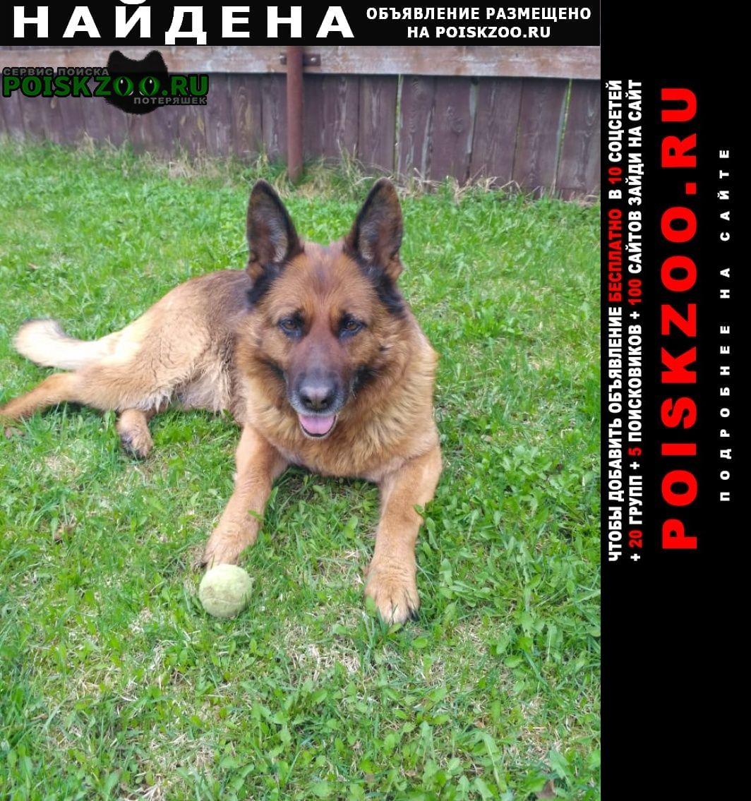 Найдена собака на мкад в районе икеа тёплый стан Москва