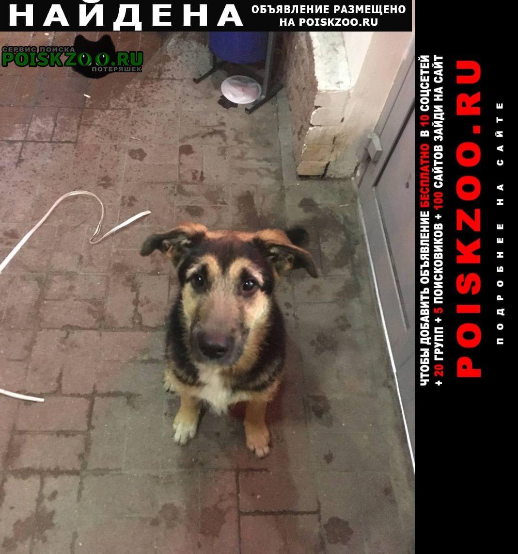 Найдена собака щенок на ул.аэродромная Нижний Новгород