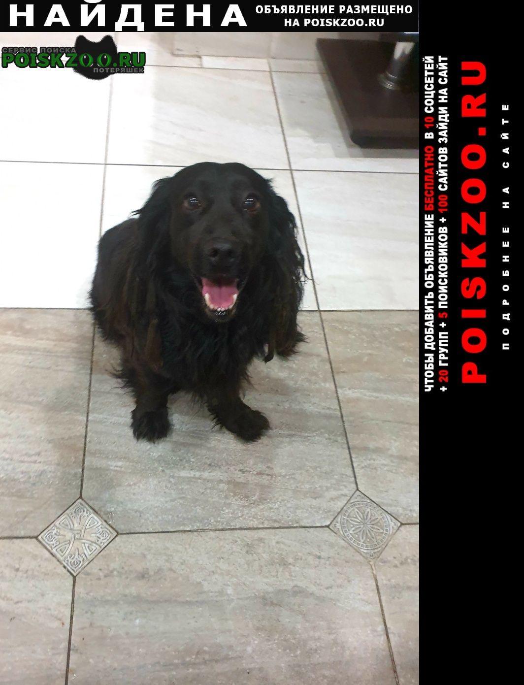 Найдена собака кобель спаниель, 9 мая Симферополь