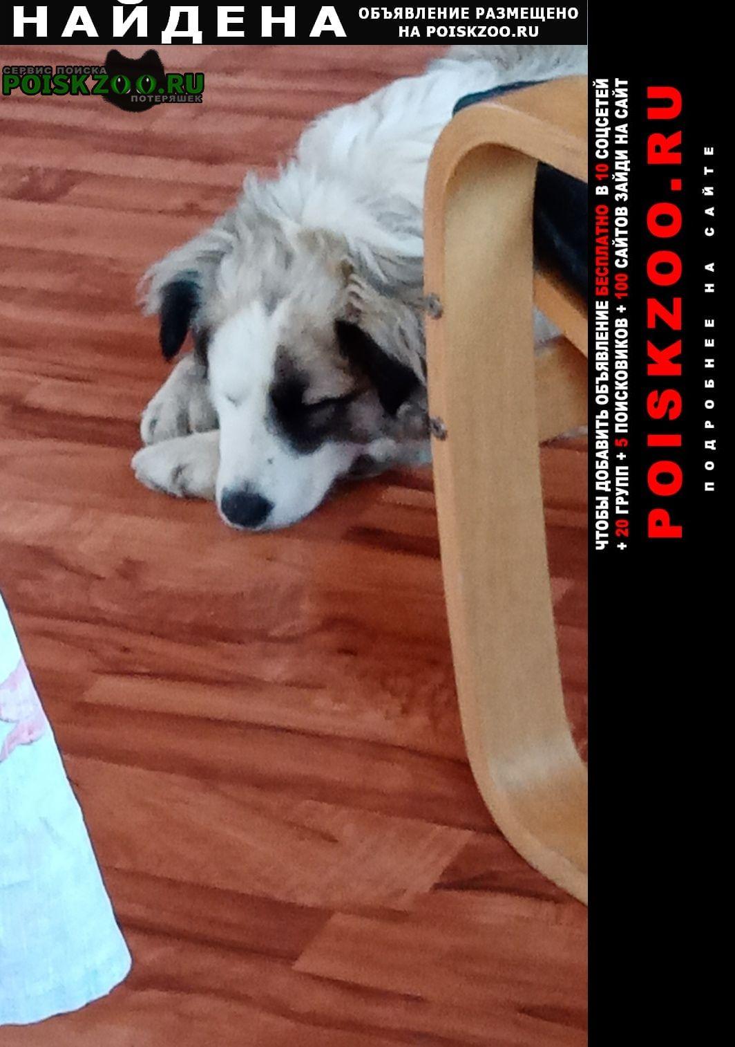 Найдена собака нашлась белка (объявление.) Истра