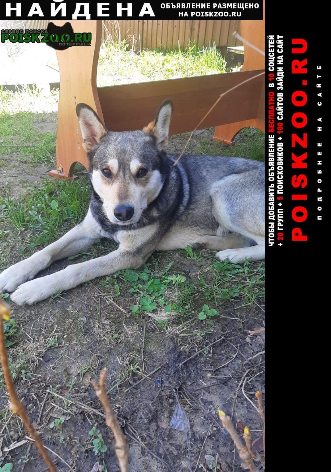 Найдена собака кобель Подольск