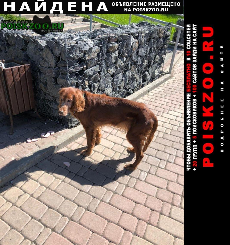 Найдена собака замечена у метро южная Москва