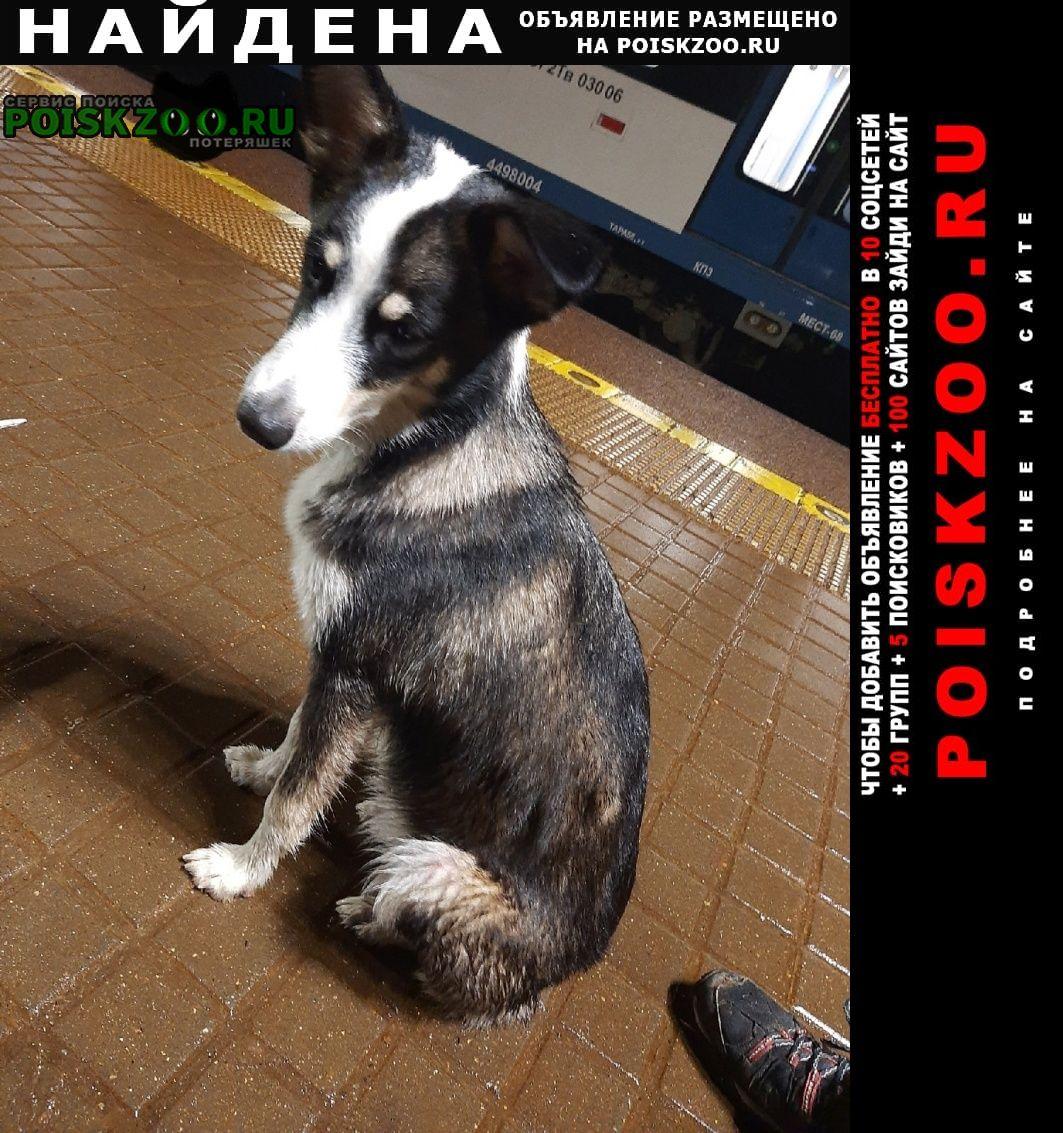 Найдена собака из электрички Лобня