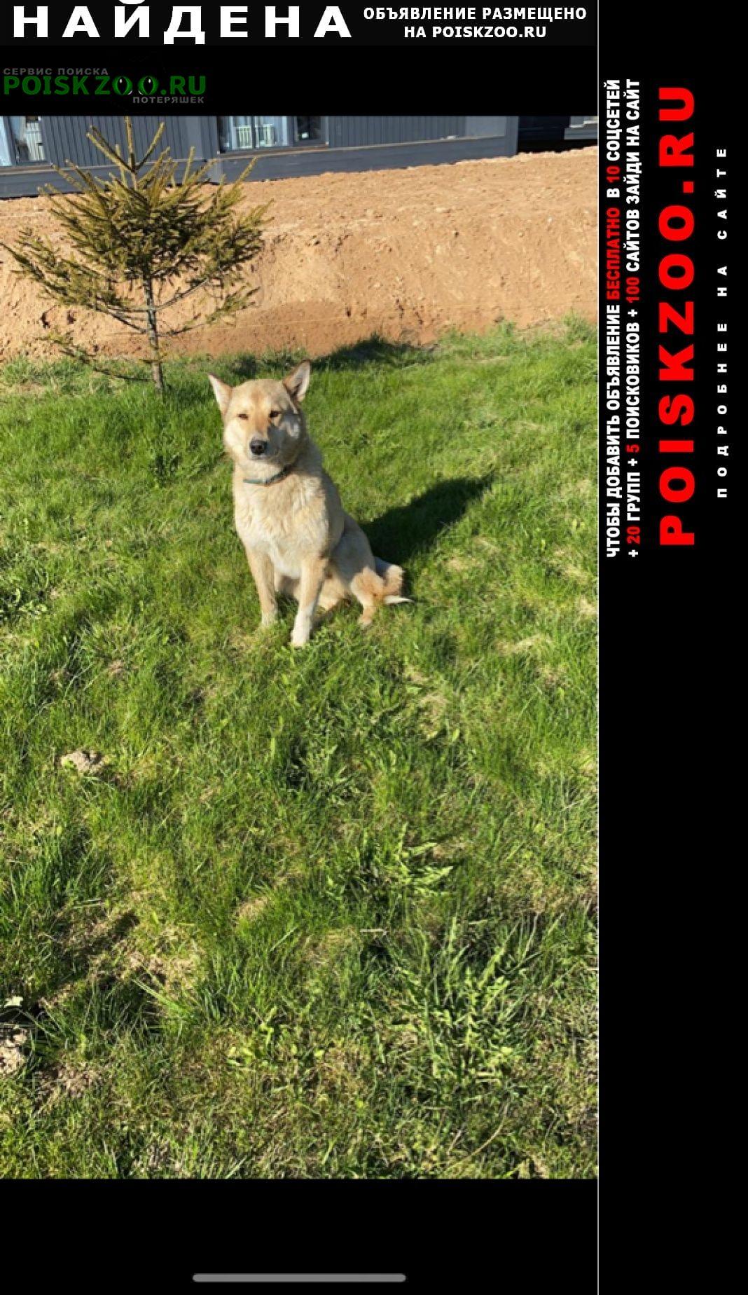 Найдена собака срочно Волоколамск