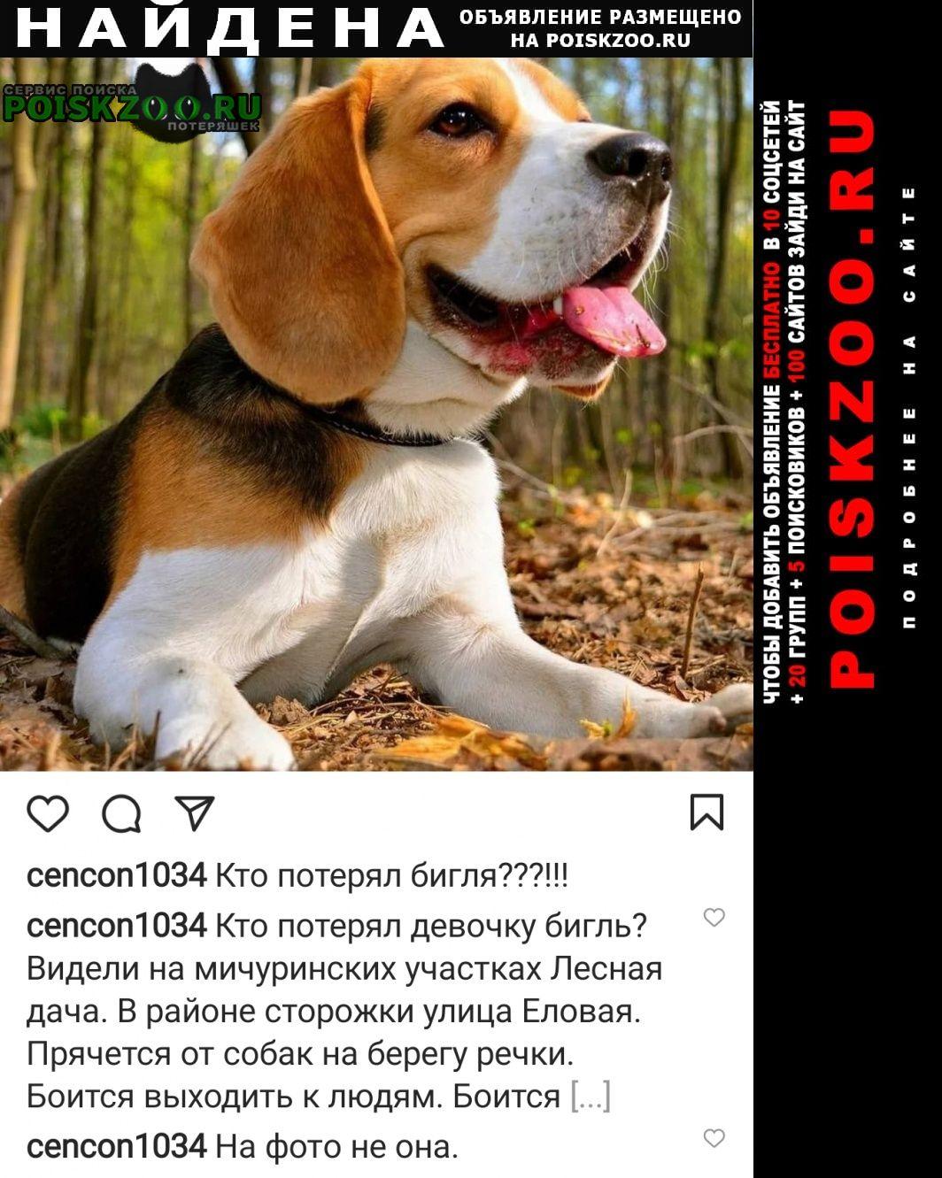 Найдена собака кто потерял бигля Томск