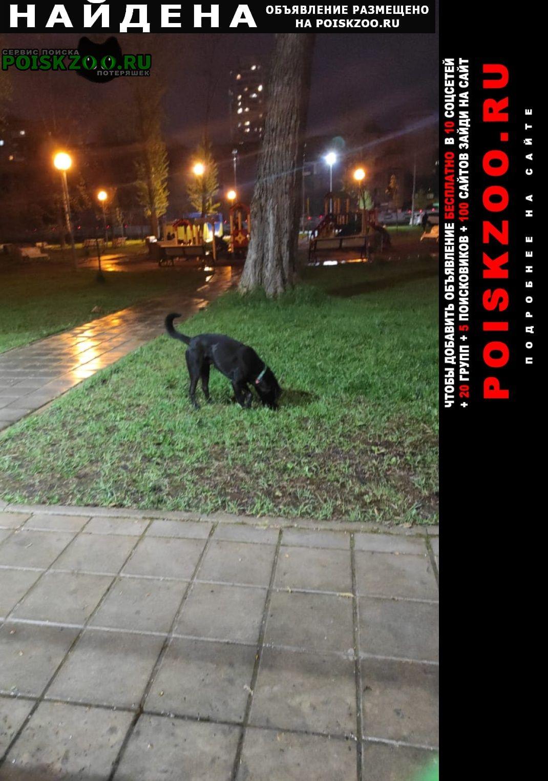 Найдена собака кобель во дворе брошенная собака Москва