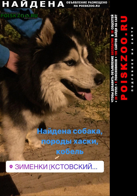 Найдена собака кобель хаски, Кстово