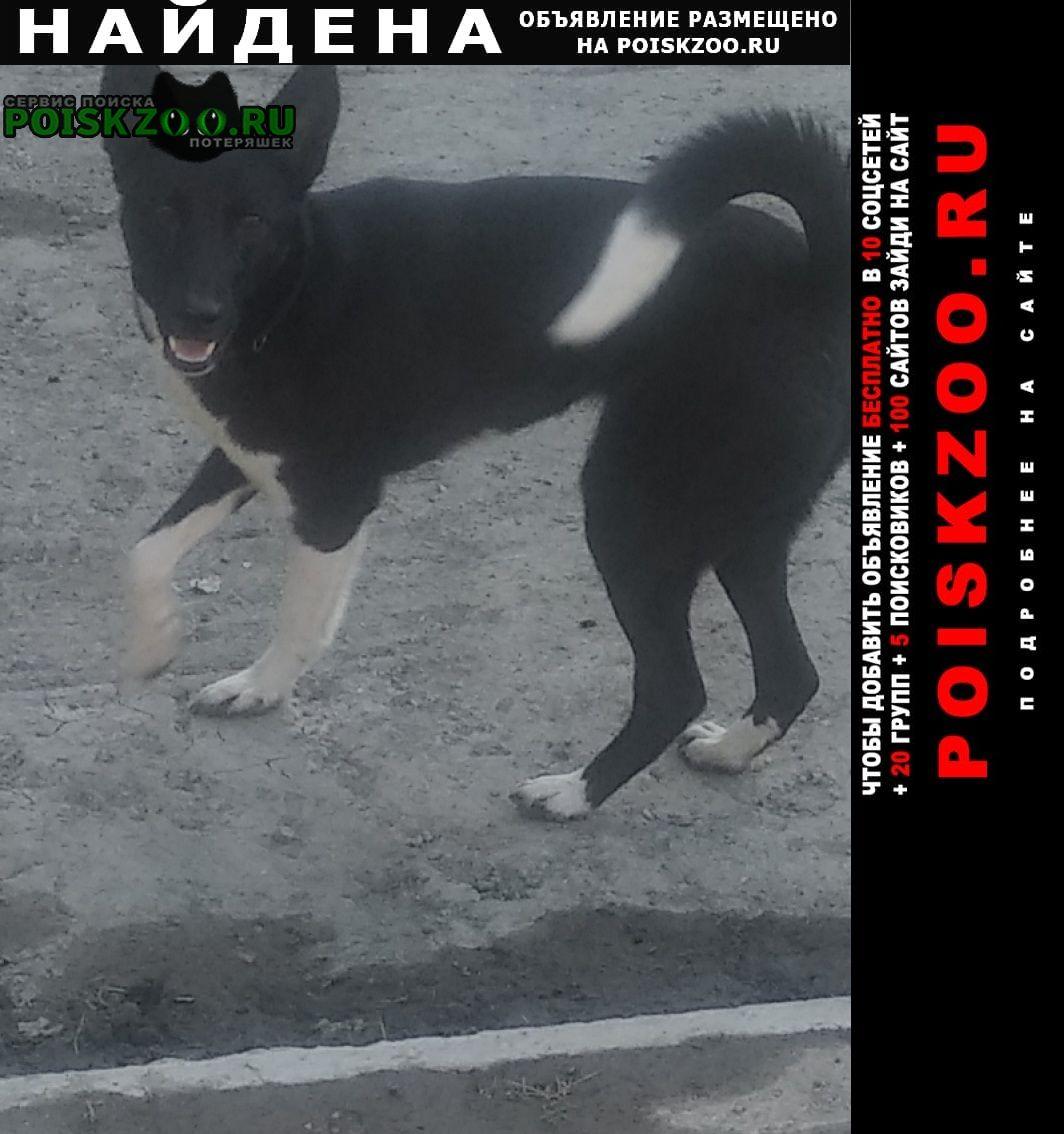 Найдена собака потеряшка Екатеринбург