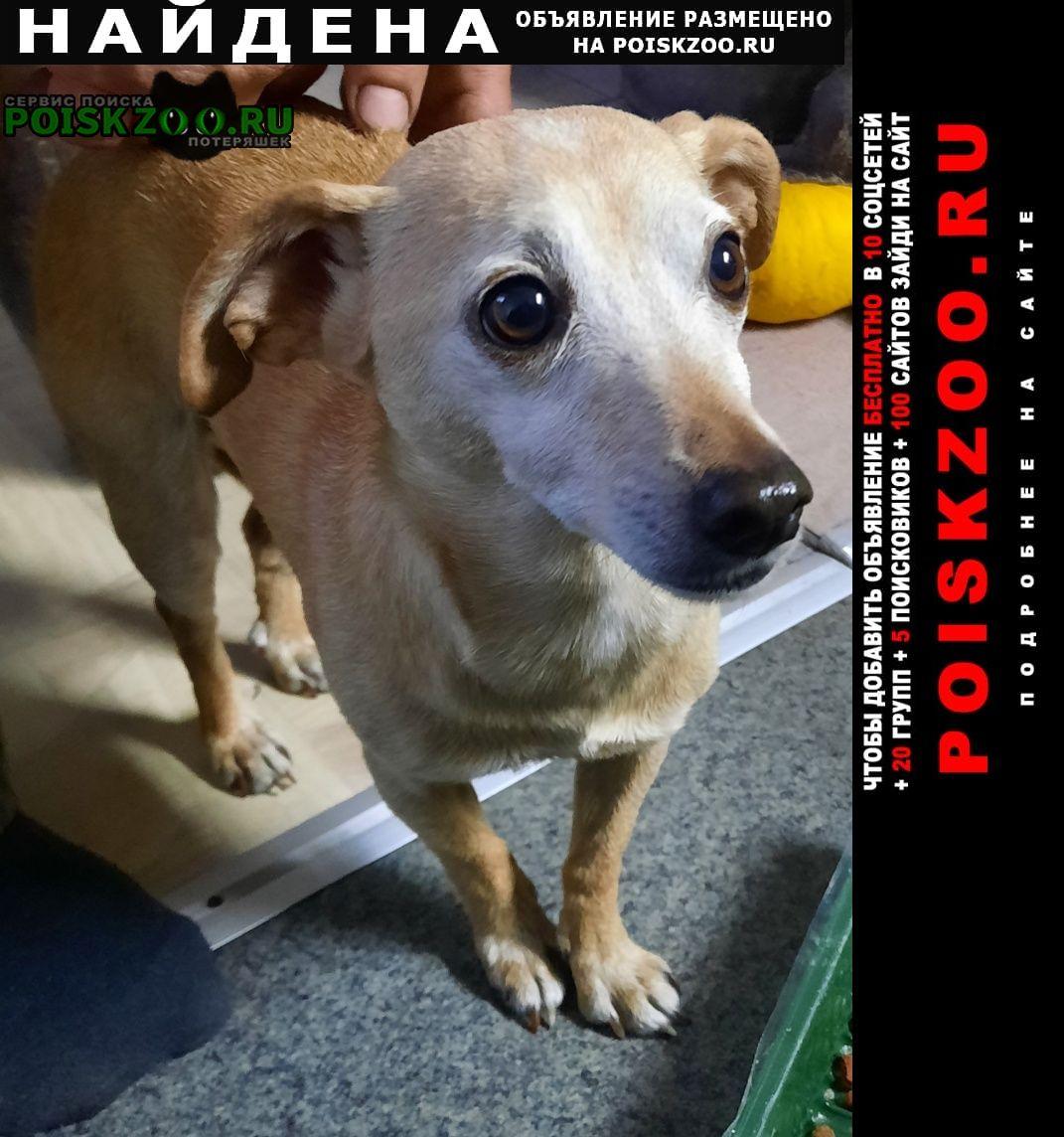 Найдена собака Новокузнецк