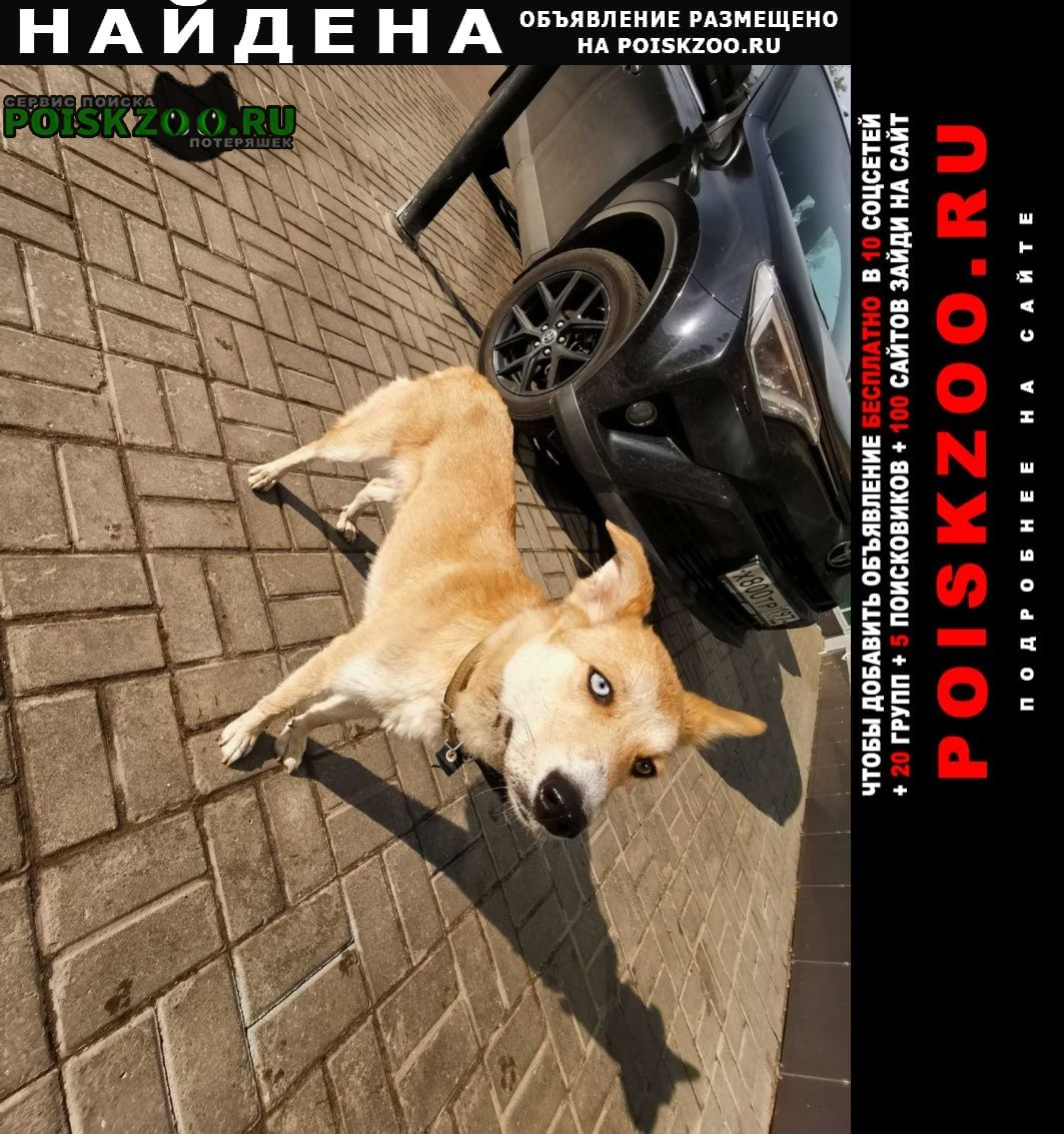 Найдена собака нашлась Москва