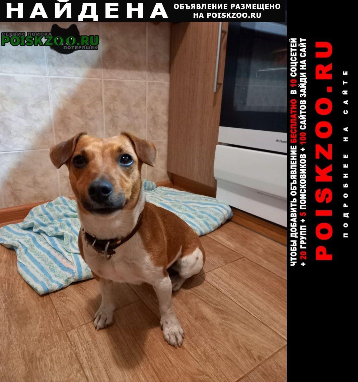 Найдена собака майкоп, черемушки Майкоп (Адыгея)