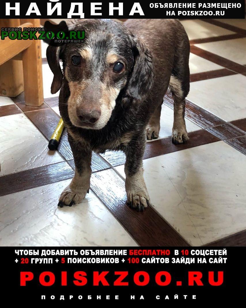 Найдена собака кобель пес охотничья собака в деревне вы Пироговский