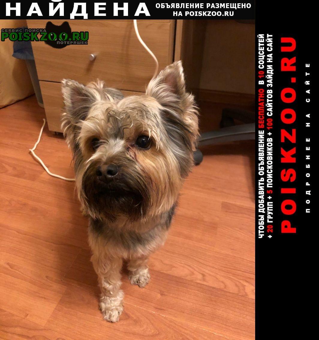 Найдена собака кобель сегодня Реутов