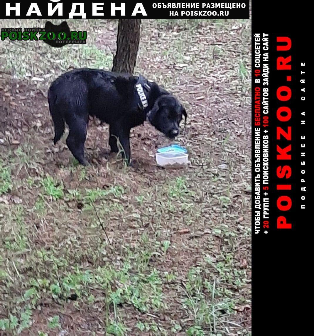 Найдена собака кобель лабрадор из домодедово Москва