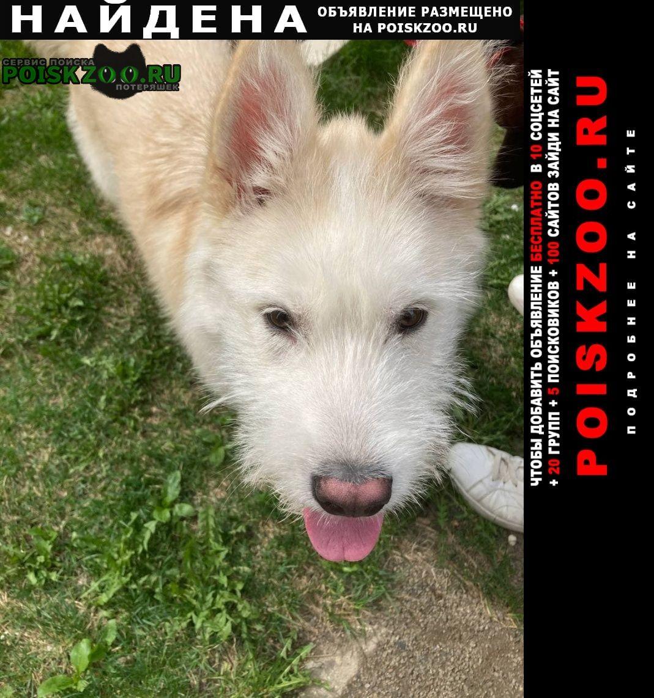 Найдена собака кобель щенок, мальчик, в городе. Химки