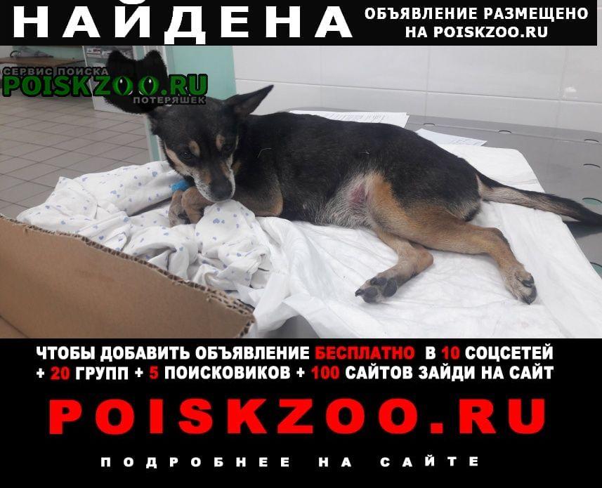 Найдена собака собачка, девочка, район зелёной Красноярск