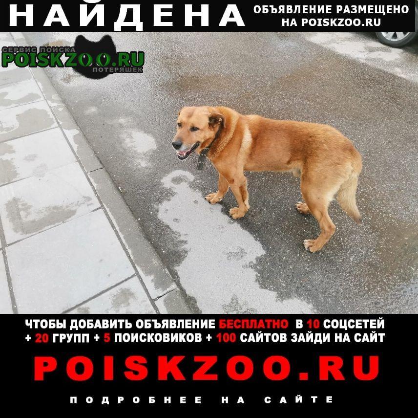 Найдена собака кобель рыжий большой пес Москва