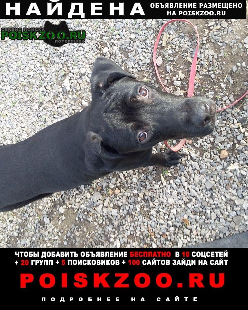 Найдена собака кобель мальчик, ленинский рн Донецк Донецкая обл.