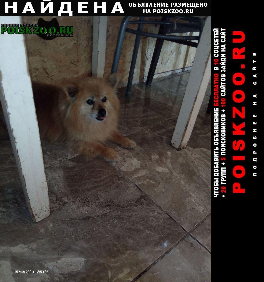 Найдена собака Белгород