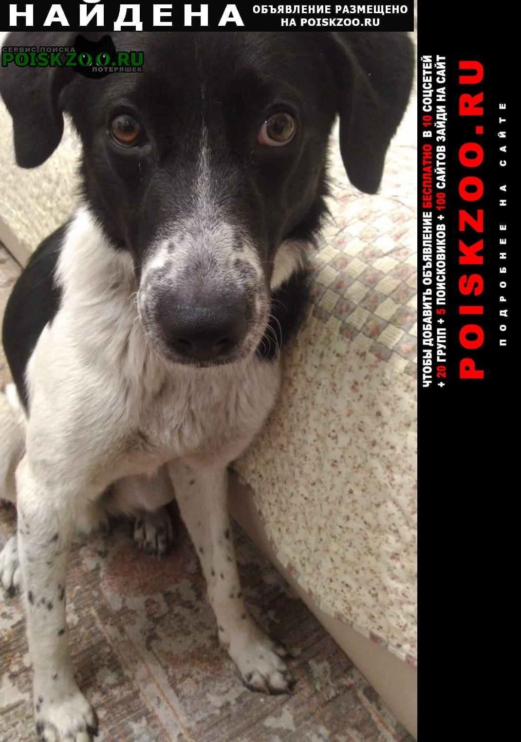 Найдена собака Люберцы