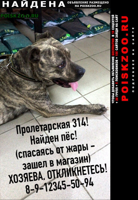 Найдена собака кобель Оренбург