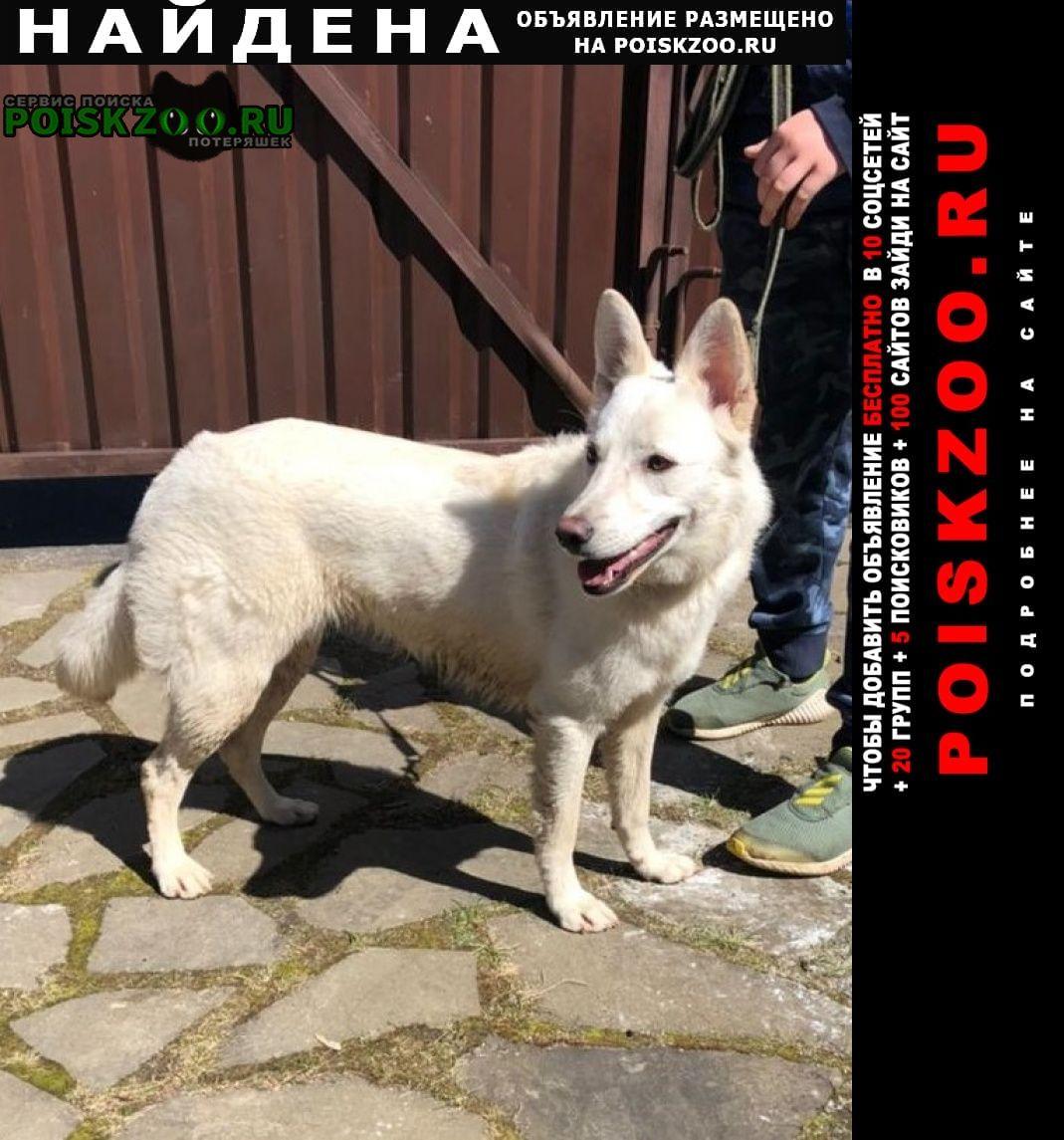 Найдена собака девочка. метис. возраст около 1 года Солнечногорск