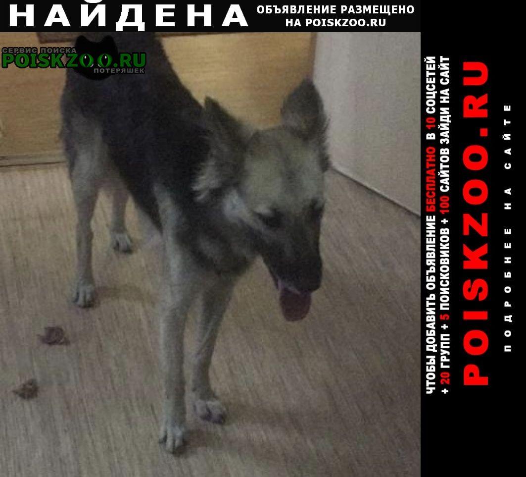 Найдена собака с ошейником Красноярск
