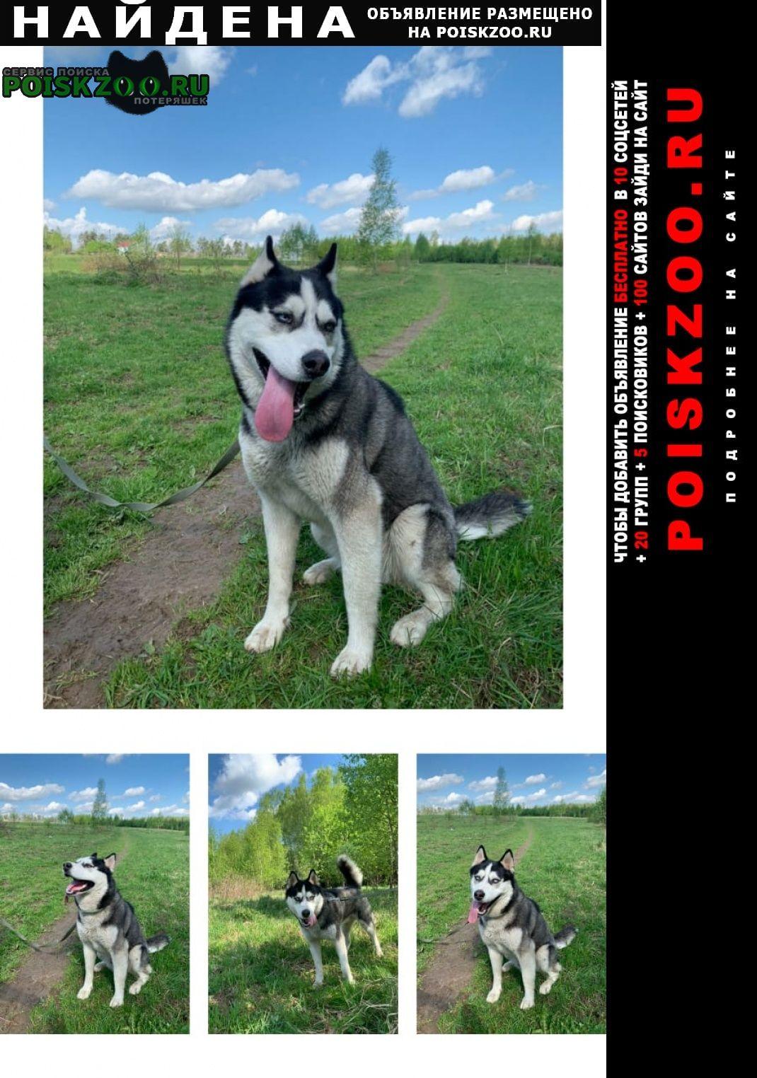 Найдена собака кобель хаски Красногорск