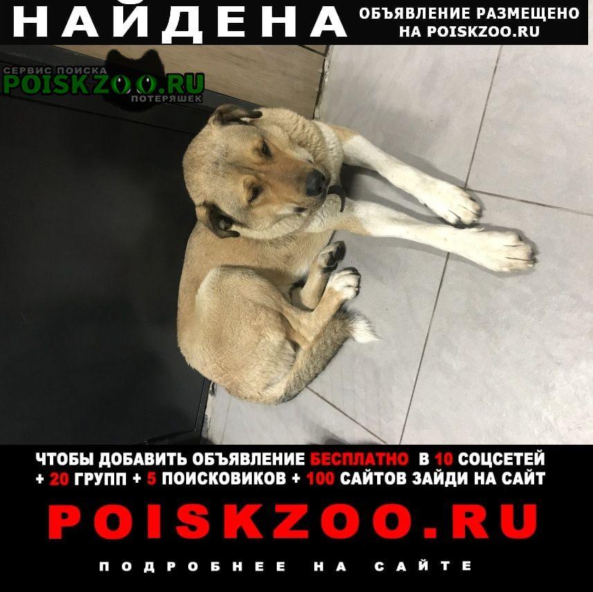 Найдена собака /дюны Сестрорецк