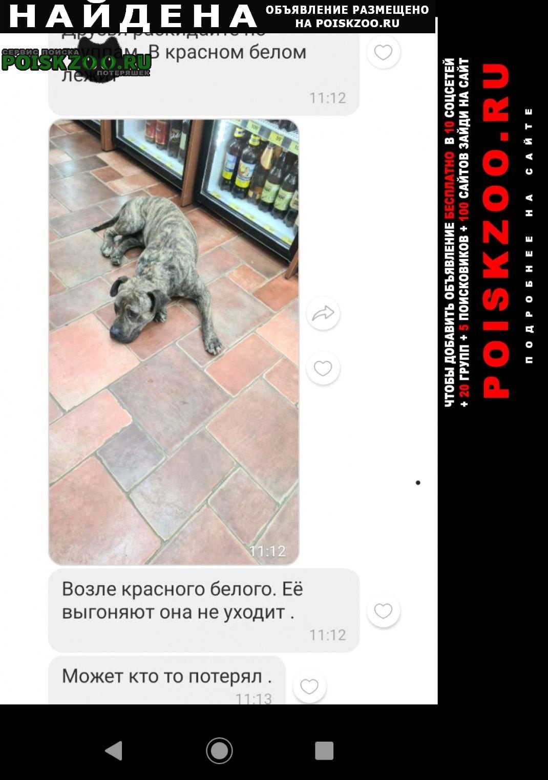 Найдена собака кобель магазин красное белое Оренбург