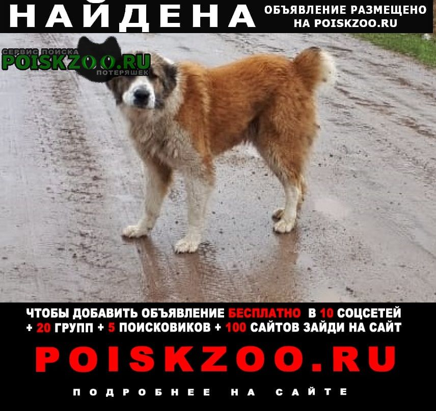 Найдена собака станция камас Красноярск