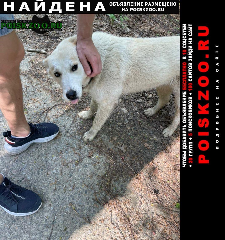 Найдена собака белая молодая девочка в ошейнике Мытищи
