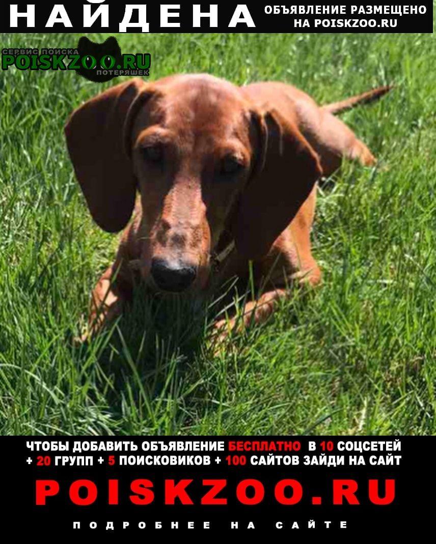 Найдена собака кобель такса Оренбург
