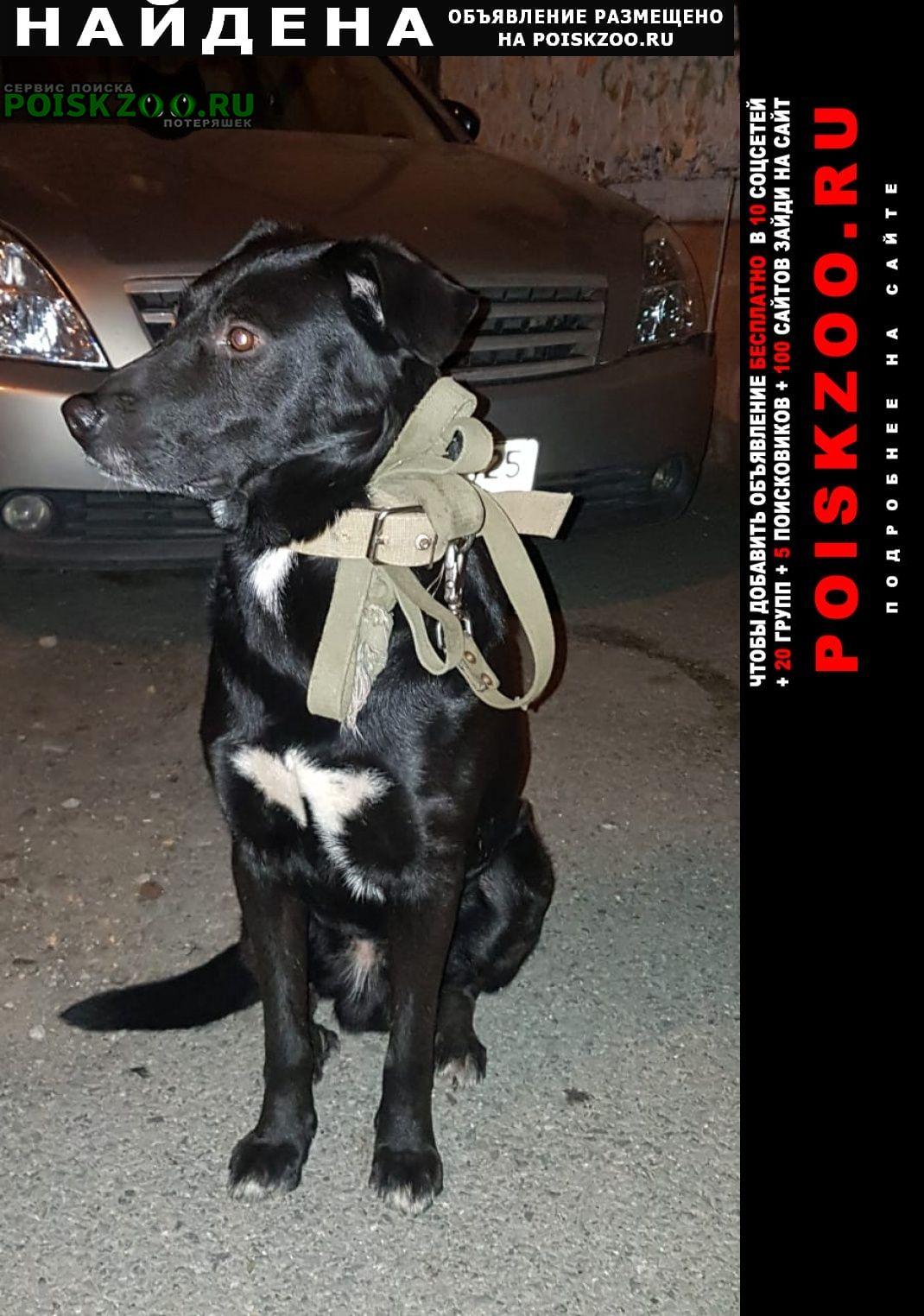 Найдена собака кобель Владивосток