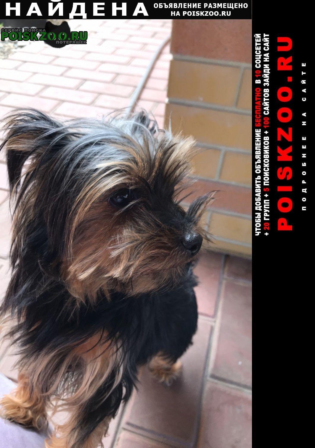 Найдена собака Саратов