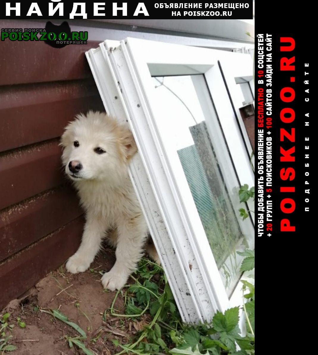 Найдена собака в п. жуково Уфа